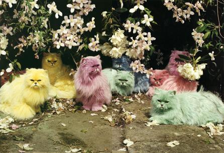 timwalkercats